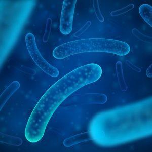 Probioticos & Bacterias